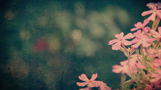 spring_flowers_2-Wide 16x9.jpg