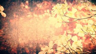 spring_flowers_3-Wide 16x9.jpg