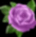 SM Flower Image.png