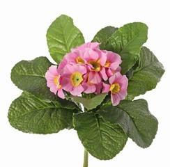 plant52.jpg