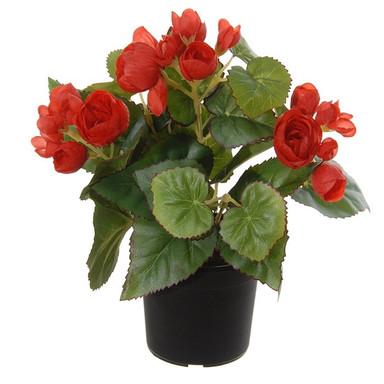 plant16.jpg