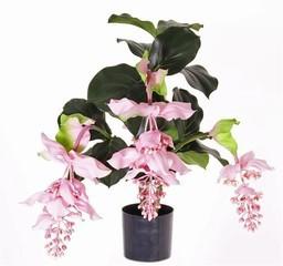 plant54.jpg