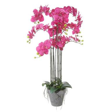 plant38.jpg