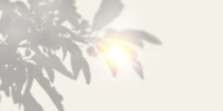 the-shadow-of-an-exotic-plant-on-a-white