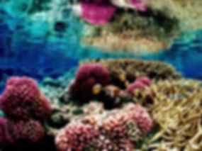 Colorful_underwater_landscape_of_a_coral