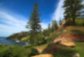 1280px-Norfolk-Island-Pines.jpg