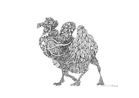 Camel Iha