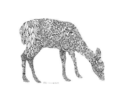 Roe deer Ko