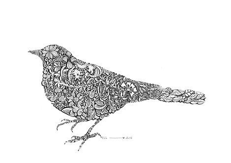 Bird Grau Grau