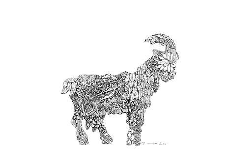 Goat Shukra