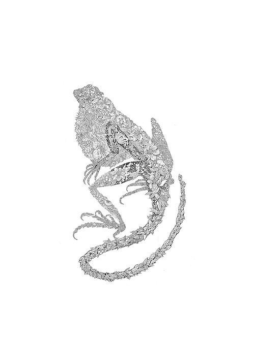 Salamander Fyou