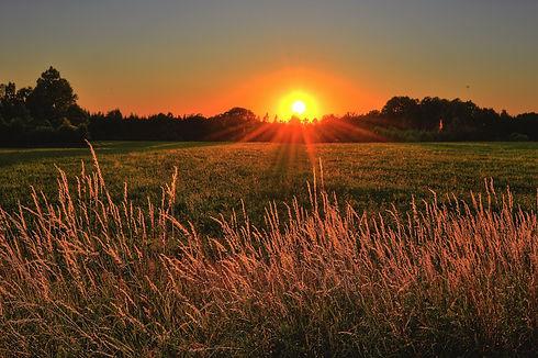 sunset on a field.jpg