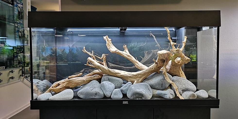 Aquarium Tutorial - Bepflanzung