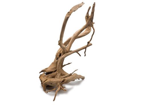 Rote Moorwurzel - Spiderwood