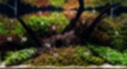 Rotala Garden