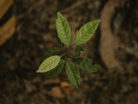 O que é gestão ambiental e quais são seus benefícios?