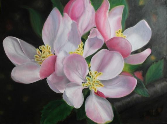 Fleur de pommier 2