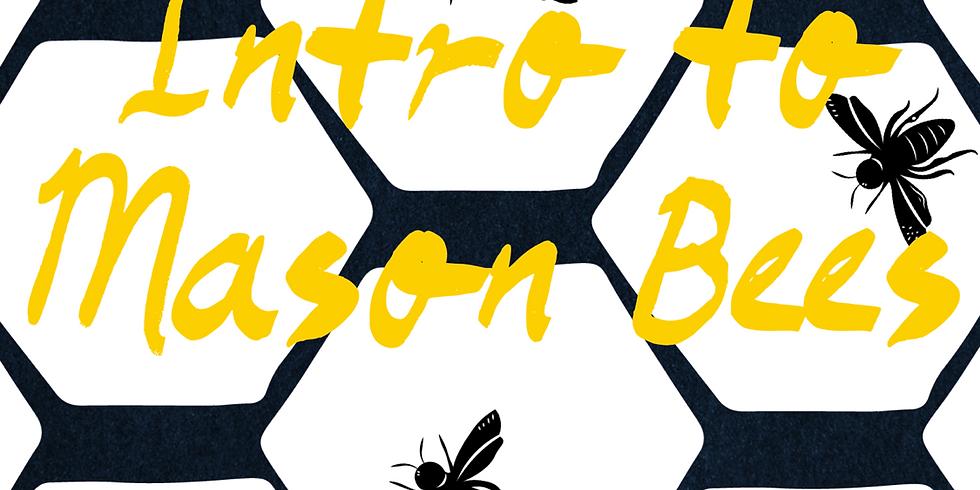 Intro to Mason Bees