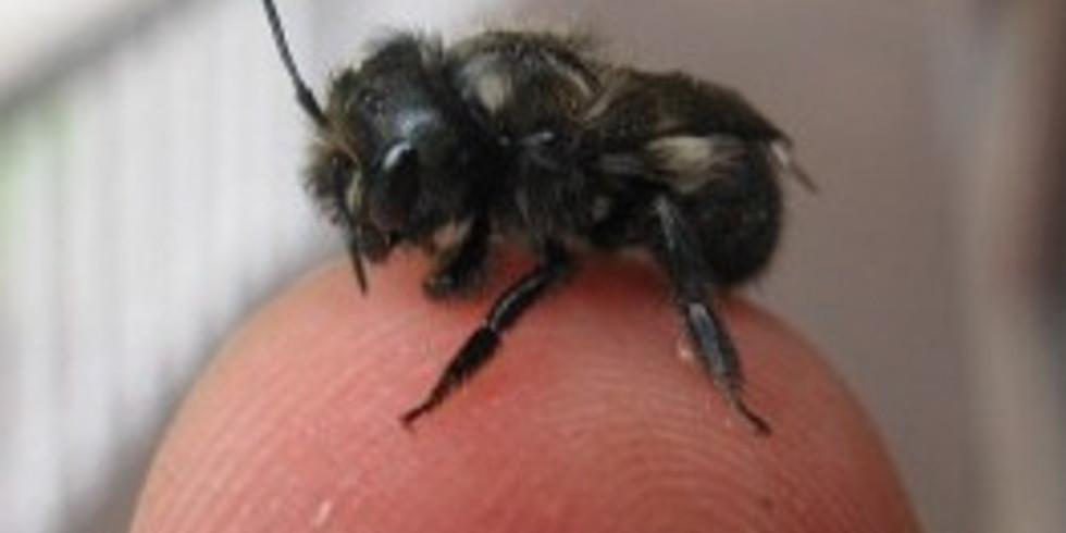 Mason Bees 101