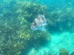 Snorkel, Dive, Freedive, Guided Snor