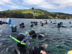 Schools, Snorkel, Dive, Freedive, Gu