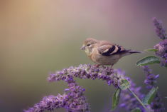 Goldfinch after.png