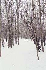 SnowyTrail.jpg
