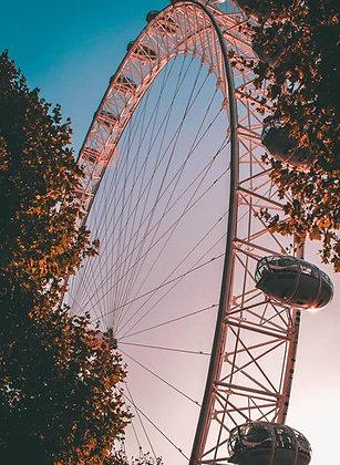 Ferris Wheel Rose