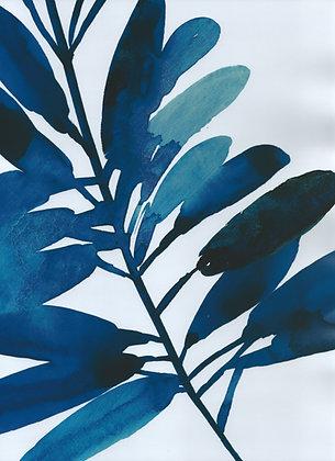 Folha Azul II