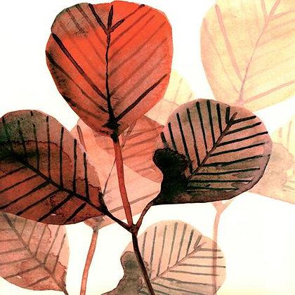 Coral Leaf