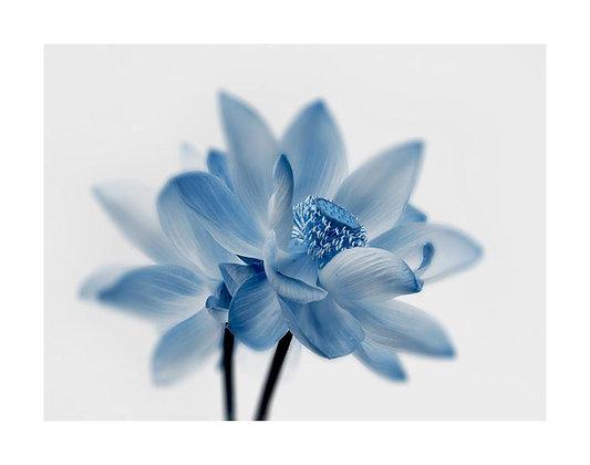 Floral RX VI