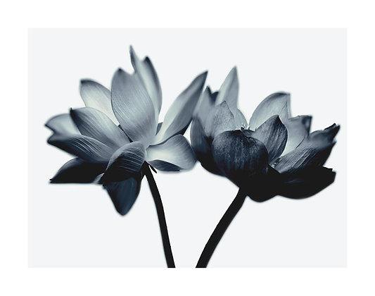Floral RX IV