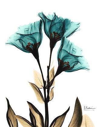 X- Ray Flower Blue
