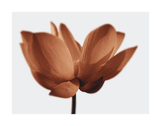 Floral RX I