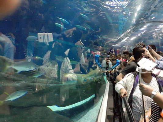 Aqua Rio e Museu 9.jpeg