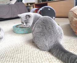 Lili 5,5 mois