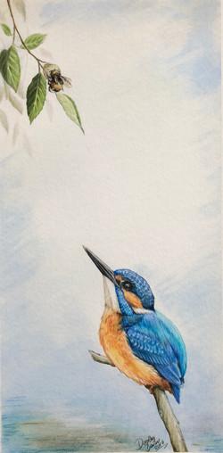 Kingfisher and bee