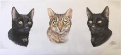 Frankie, Little Puss and Bennie