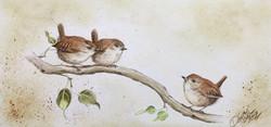 Little wrens