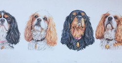 Daisy, Katie, Holly and Lily