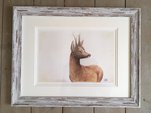 Roe Buck Framed limited edition print