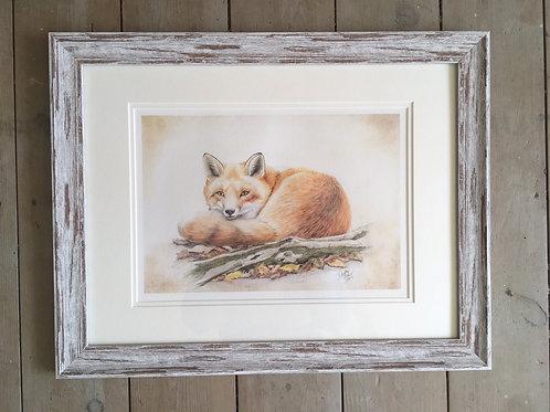 Foxy framed limited edition print