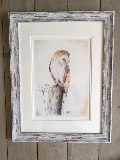 Barn Owl framed limited edition print