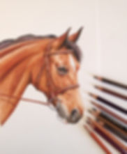 Horse portrait, pet portrait, north yorkshire, pet portrait artis