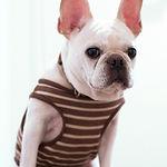 Hund in entfernten Hemd