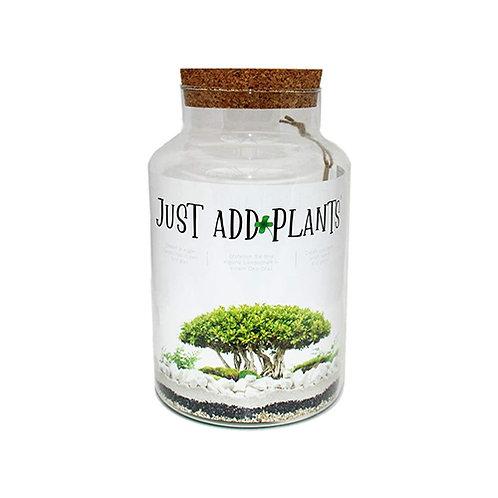 Kit DIY grand terrarium bouchon de liège + 3 plantes grasses