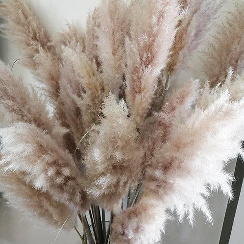 Fleurs séchées pampas plumeaux X 1 tige de 150 cm naturel