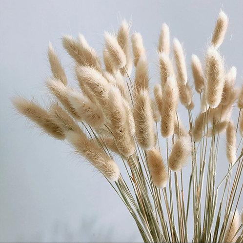 Fleurs séchées pompons lagarus ovatus X 50 tiges de 45 cm naturel