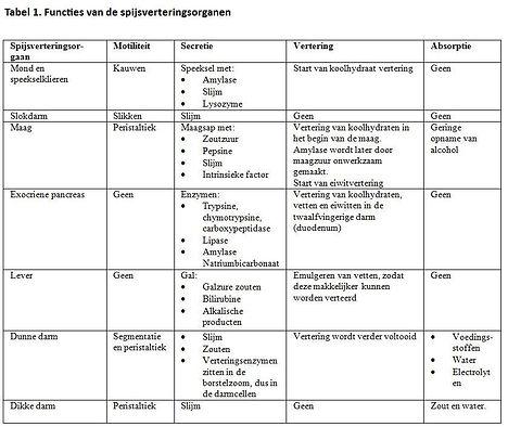 functies-spijsverteringsorganen2.jpg