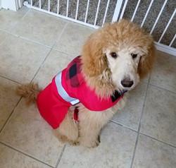 BELLA IN RED BUFFALO PLAID WP DOG COAT